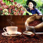 Cà phê Arabica là gì?