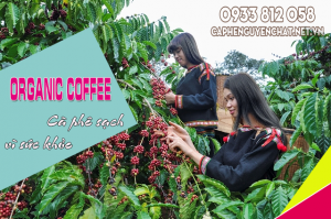 Cà phê hữu cơ là gì?