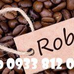 Cung cấp cà phê Robusta hạt rang
